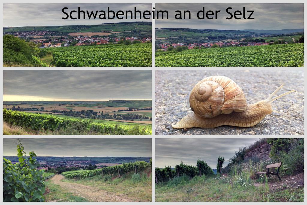 6. WebTreffen mit INJELEA in Schwabenheim