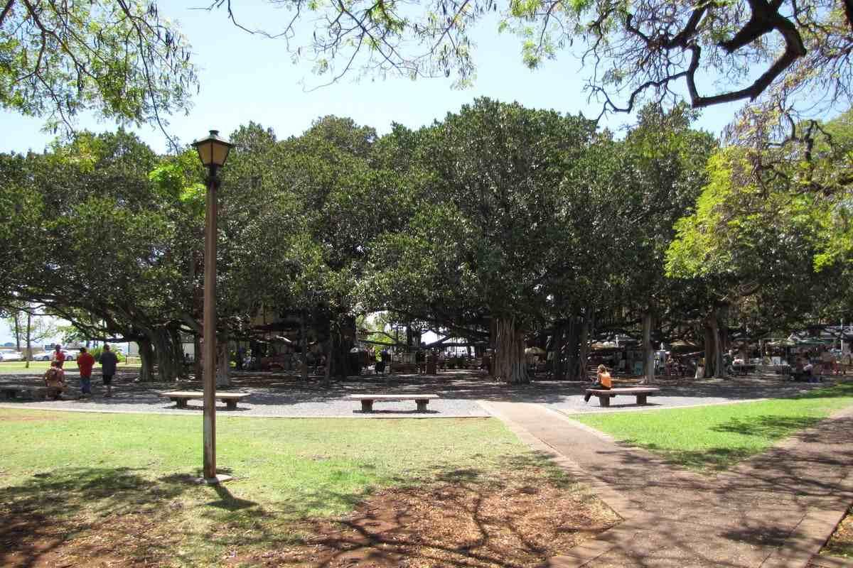 Aloha Friday Foto: Lahaina Banyan Court Park