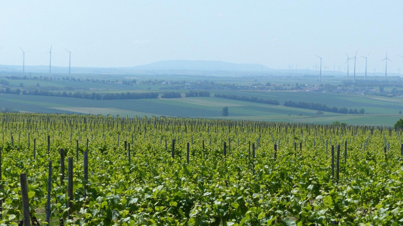 Selzen, Selztal und Rheinhessen: Auf der richtigen Rheinseite